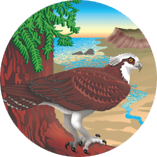 Stewards of the Coast and Redwoods Logo